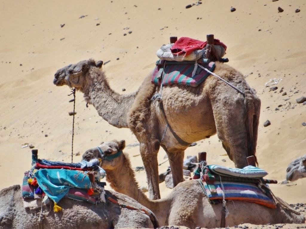 Pustynia Egipska