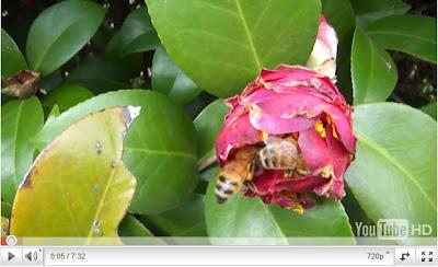 無敵蜜蜂 培育