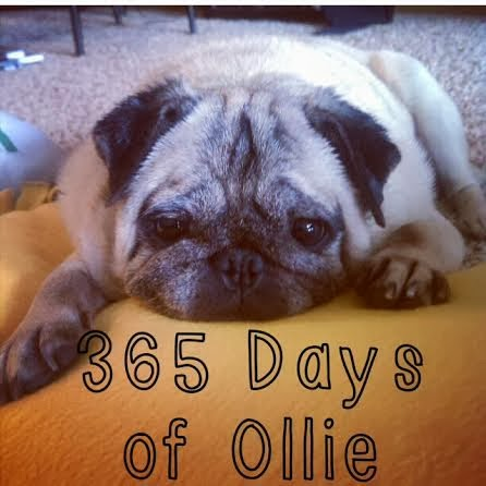 365 Days of Ollie