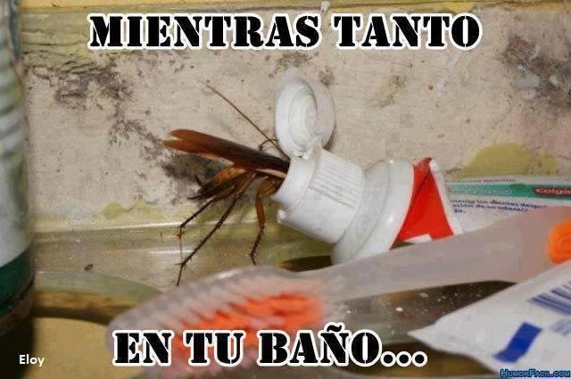 Imagenes De Baño Chistosas:imagenes chistosas fb: como se alimentan las cucarachas en tu baño