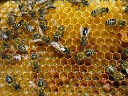 Propolis Definition And Benefits For Humans