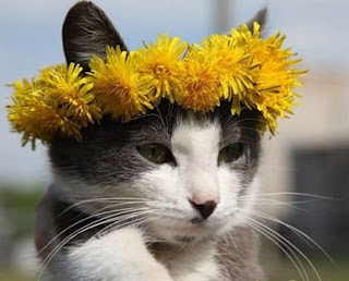 cat with crown of flowers