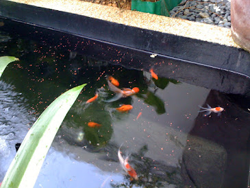 Tea garden Gold fish pond