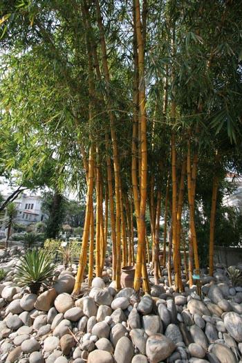 El bamb en el jard n jard n y terrazas - Jardin de bambu talavera ...