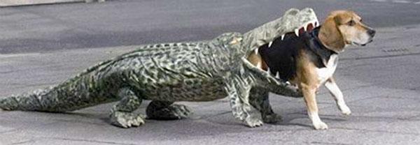 [Image: halloween+croc.jpg]