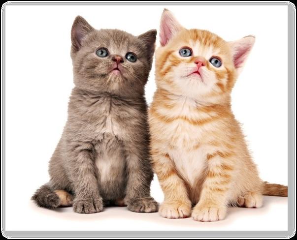 Articol despre gestatia si nasterea la pisici