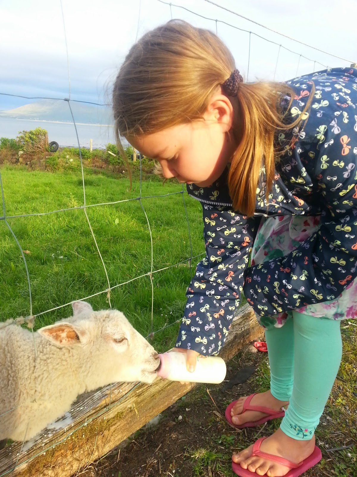 photo of lamb being given a bottle by young girl