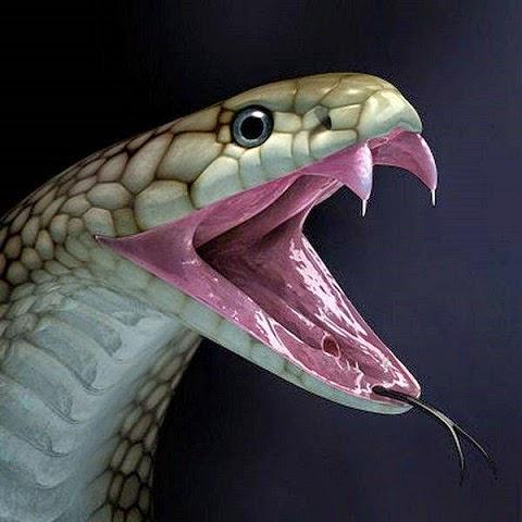 Ular Pertama di Dunia Pemakan Dinosaurus