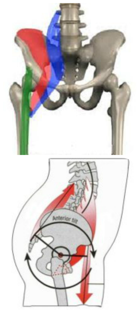 hip flexor pressure or fai