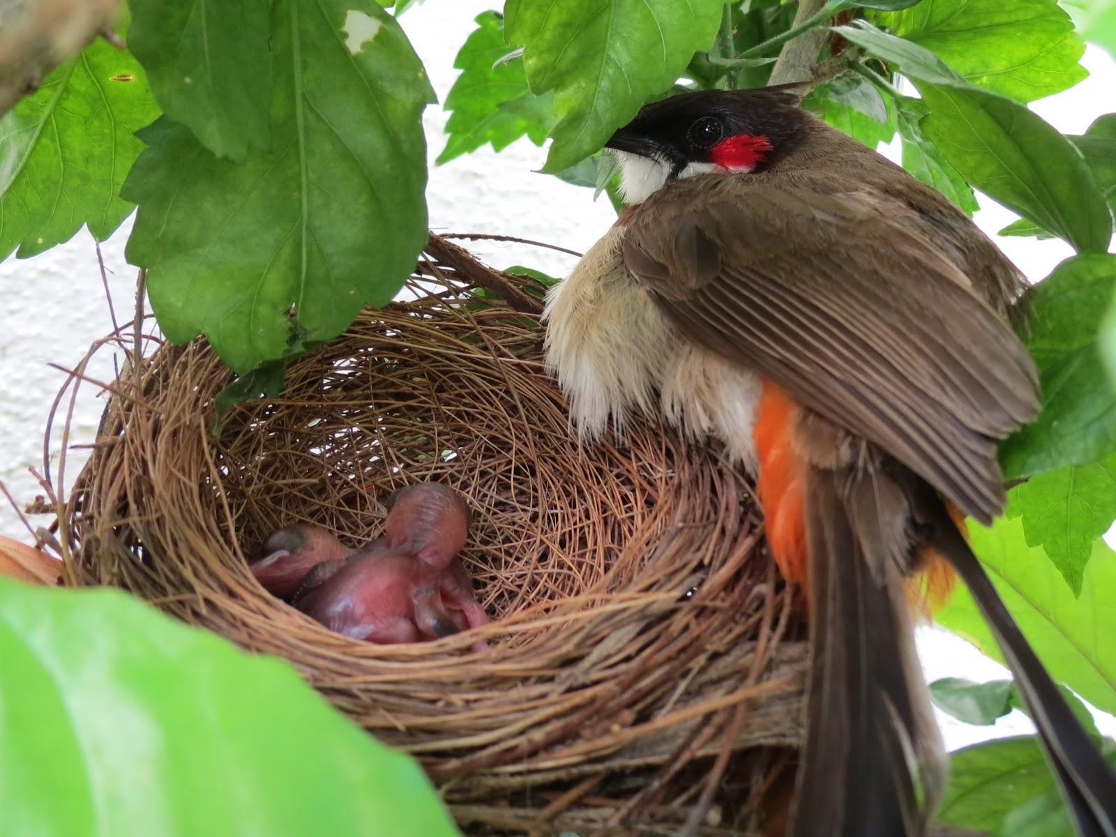 red bird nest and - photo #38