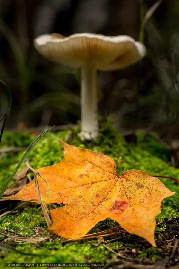 Macro autumn photo