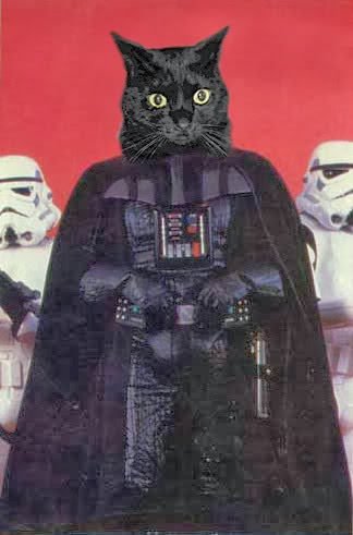 caterville darth vader cats
