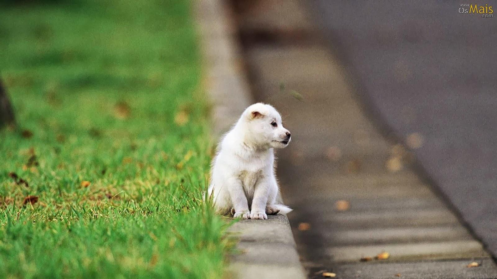 Animales cachorros mejoran la productividad Terra - imagenes de animales cachorros