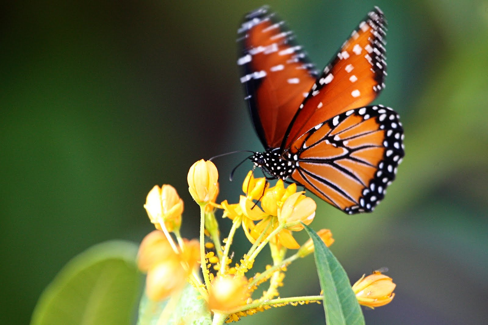 Real Life Butterfly Pictures Real Colorful Butterfl...