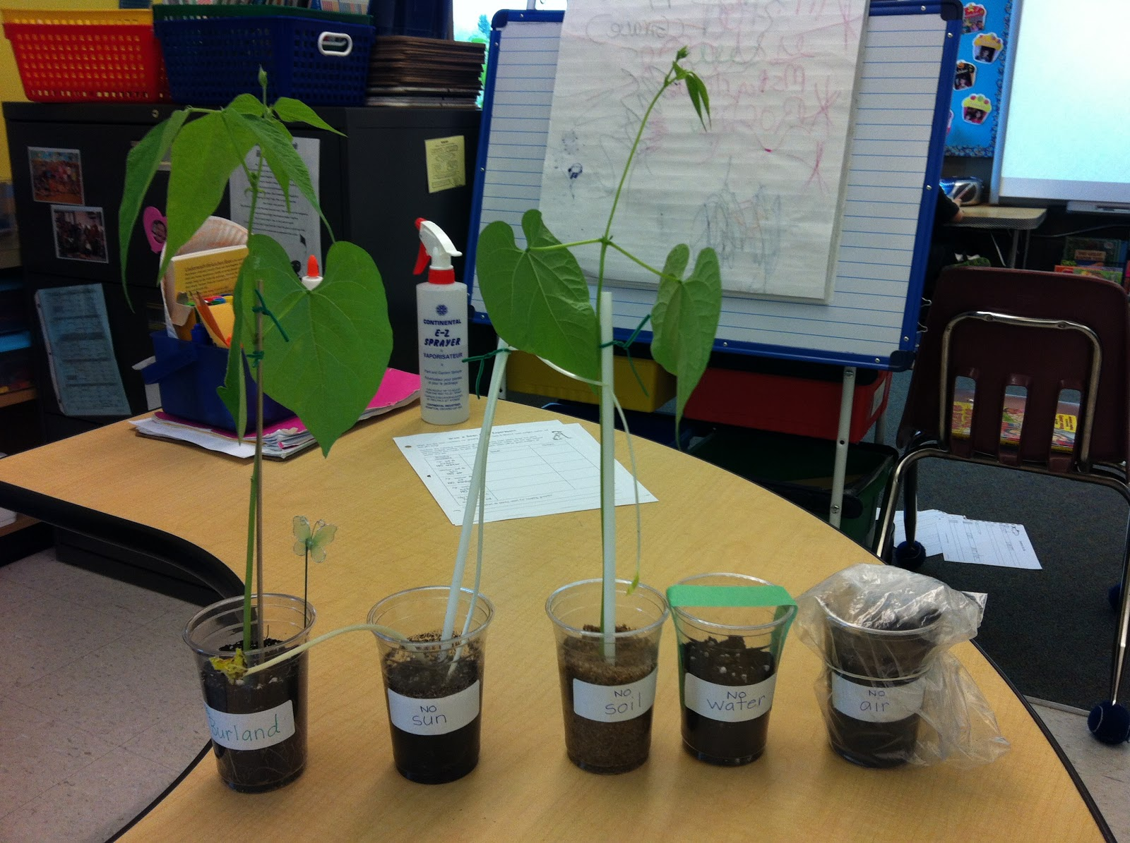 The learning adventures of team 24 the windowsill jungle for Soil and plant lab