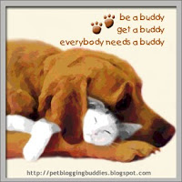 Get A Pet Blogging Buddy