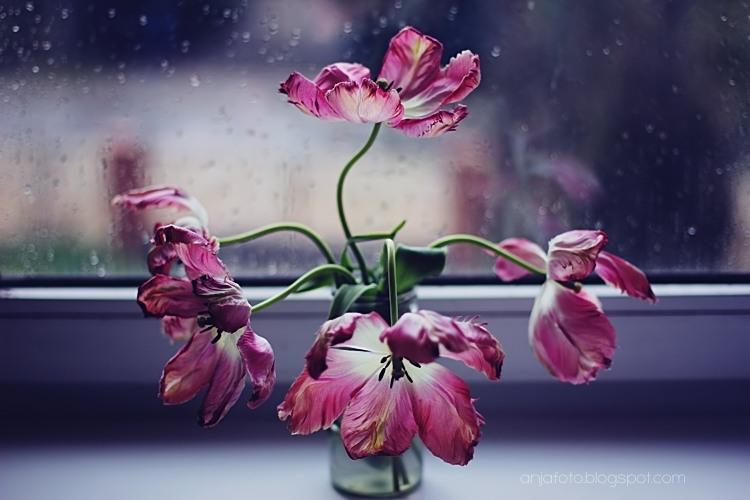 tulipan, tulipany, kwiaty, wiosenne kwiaty, wiosna, bokeh, bokeh photography