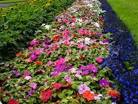 pistike virág