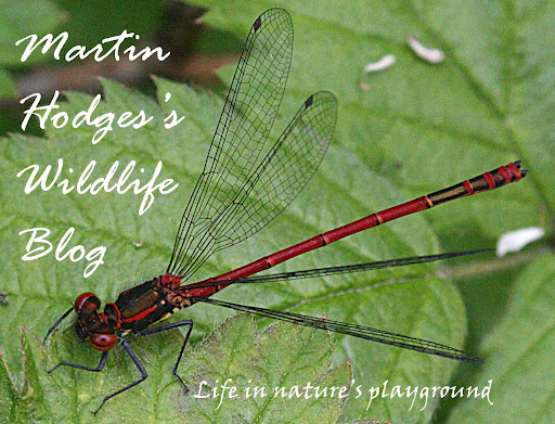 Martin Hodges' Wildlife Blog