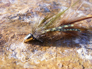 Fly of the Day