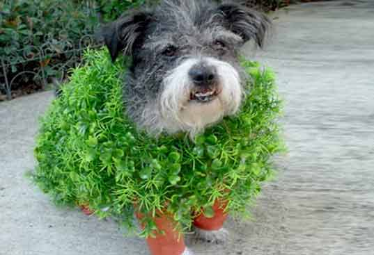 Why Do Dogs Eat Soil And Grass