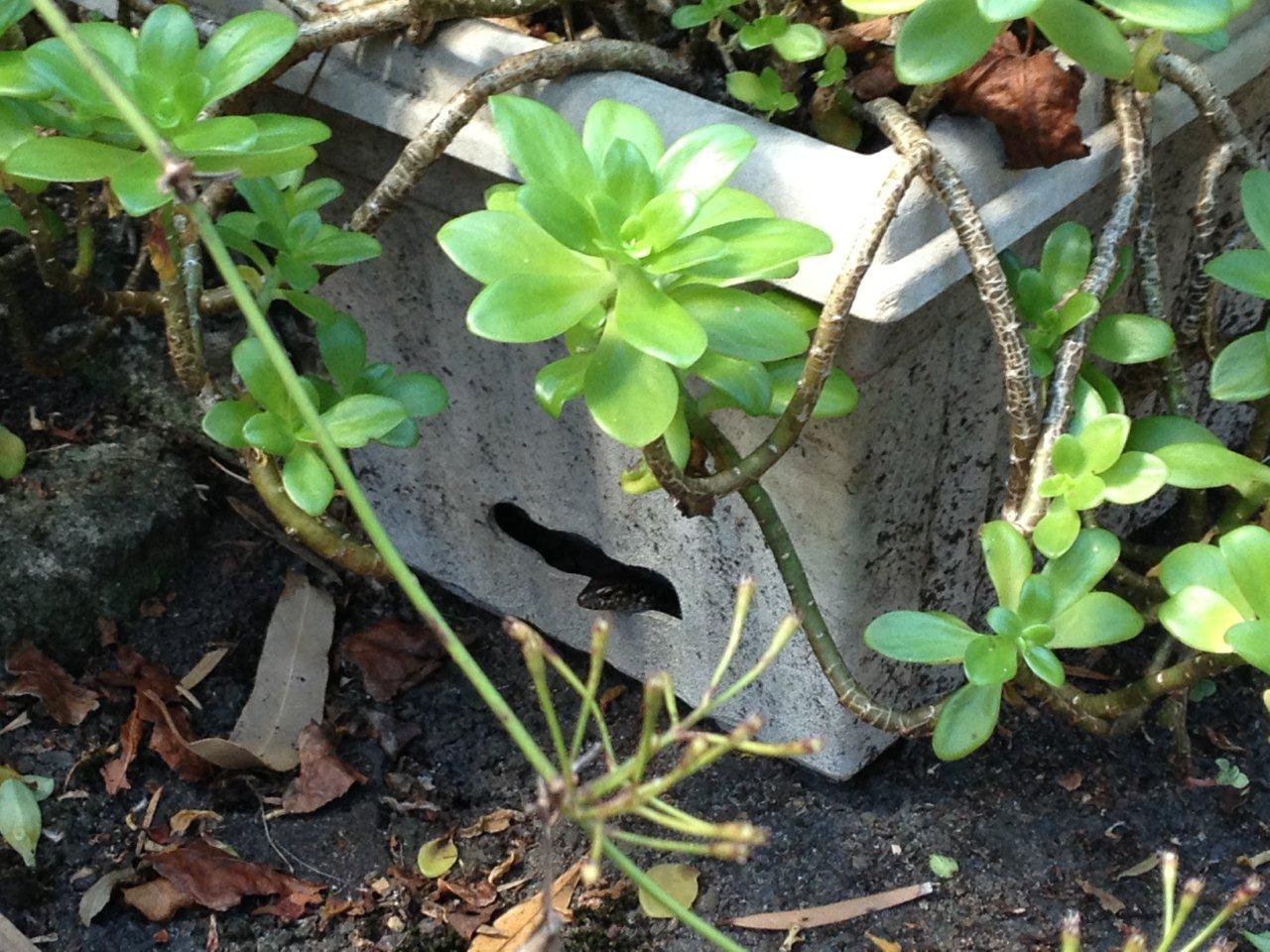 real world gardener crocodile rocky in the garden