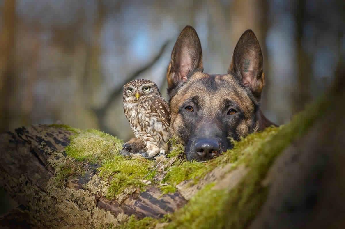 كلب وبومة