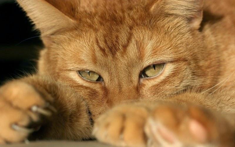 Коты случаются 06