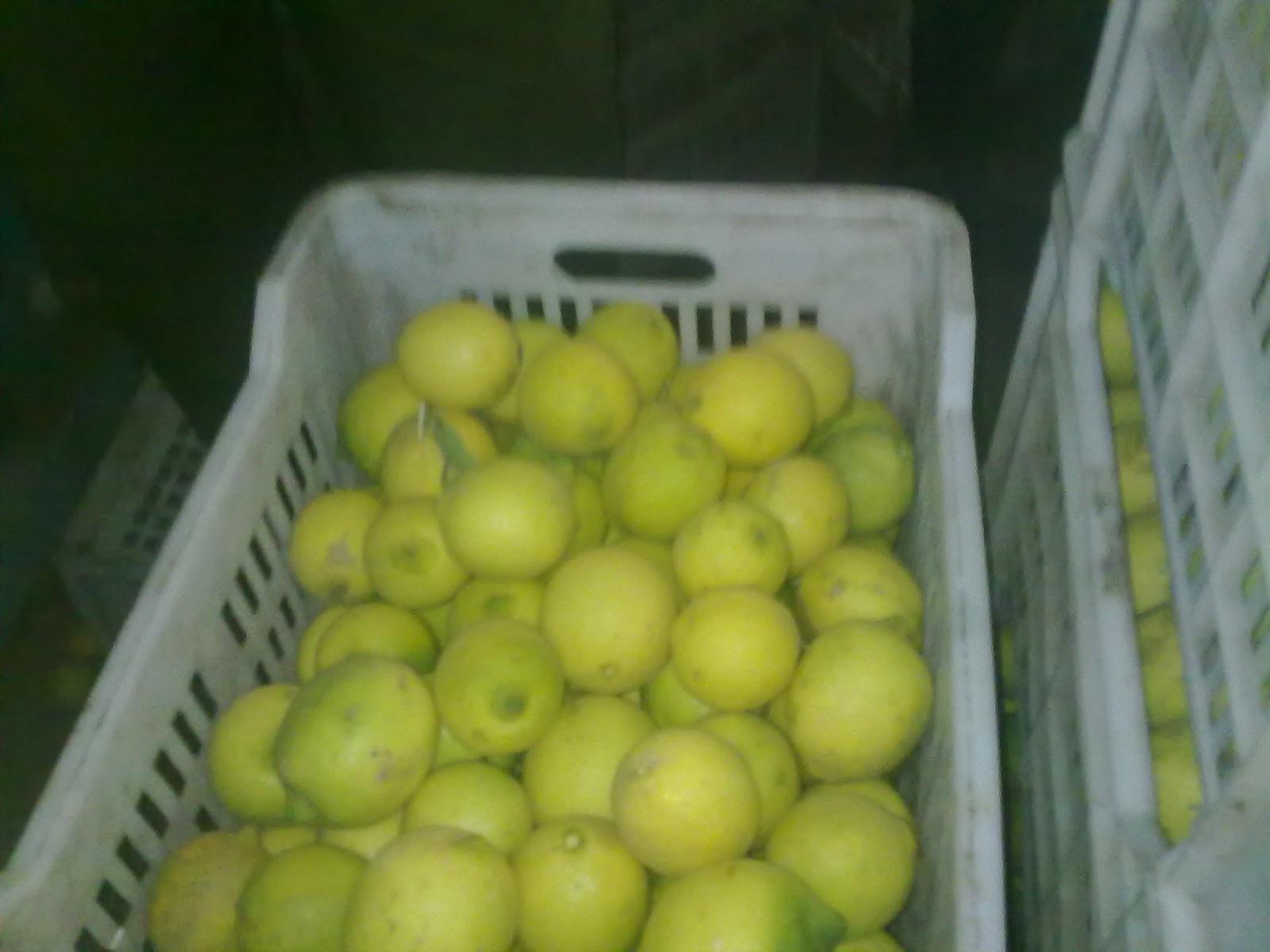 lemon_suppliers