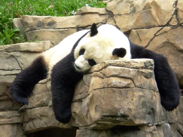 Pandascrapper.blogspot.com