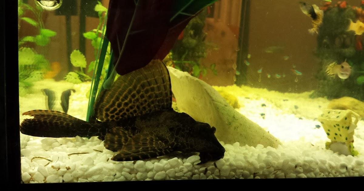 aquarium acheter