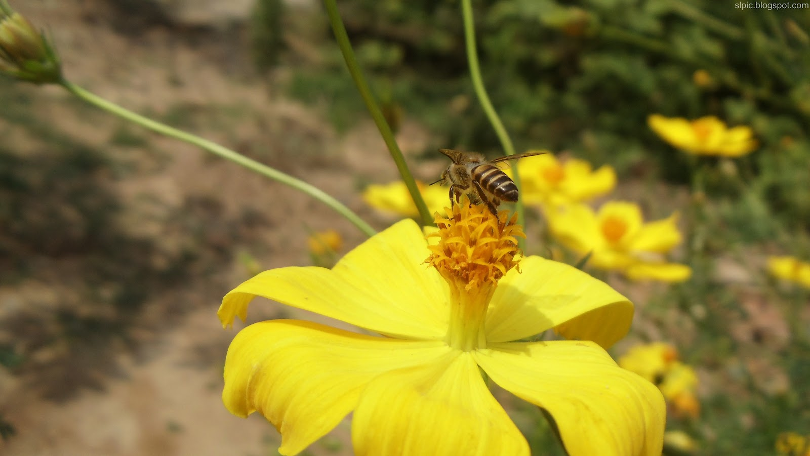 http://4.bp.blogspot.com/-8FKoVKbYnaU/UBInEbJ5tfI/AAAAAAAAKko/FNt4N8hvDYQ/s1600/Srilanka+Various+Flowers+And+Nature++(2).JPG