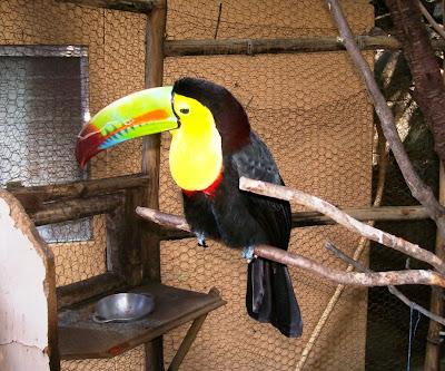 wildlife animal photography in Nicaragua