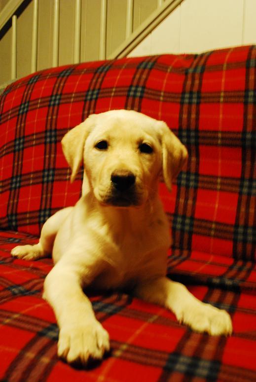 Kristi's puppy