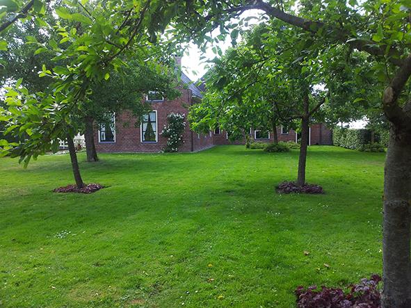 Bomen In Tuin : Bomen in de tuin bomen en struiken snoeien zo zet je de schaar in