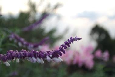 La naturaleza y sus colores