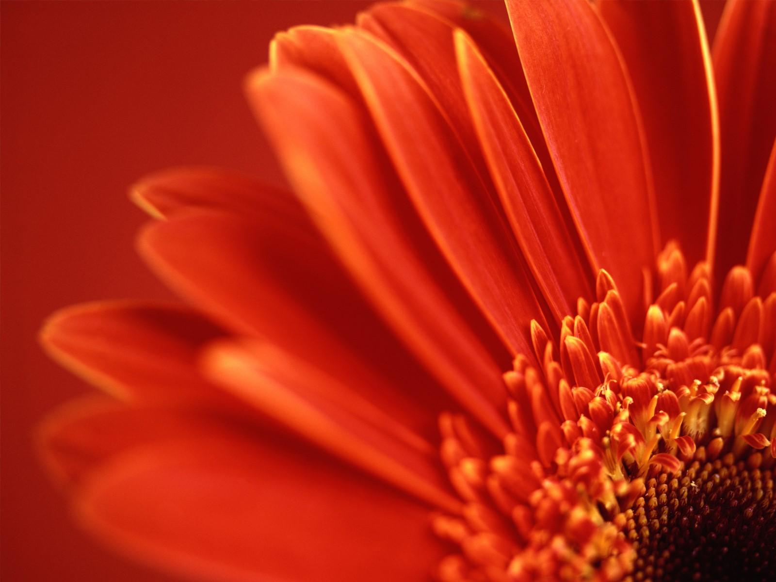 http://4.bp.blogspot.com/-8GS2GfzR4A4/T7iIeAoJQDI/AAAAAAAADlQ/PMZu1vZZOHM/s1600/flowers+wallpaper+desktop-5.jpg