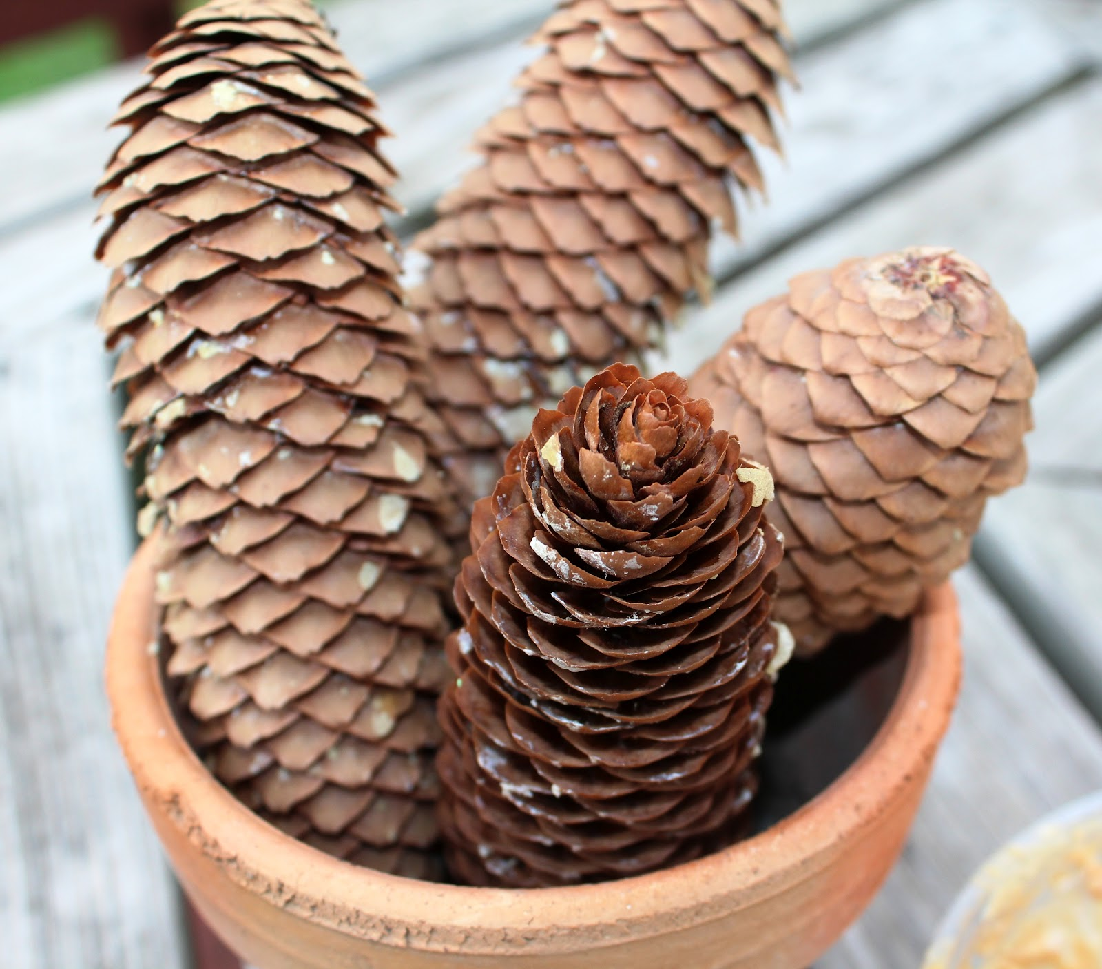 Kate S Life You Re Reading My Mind Pine Cone Bird Feeder