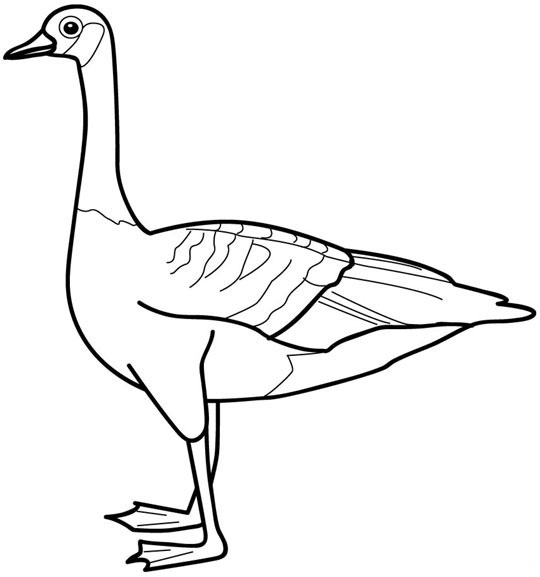 goose animal coloring pages to kids
