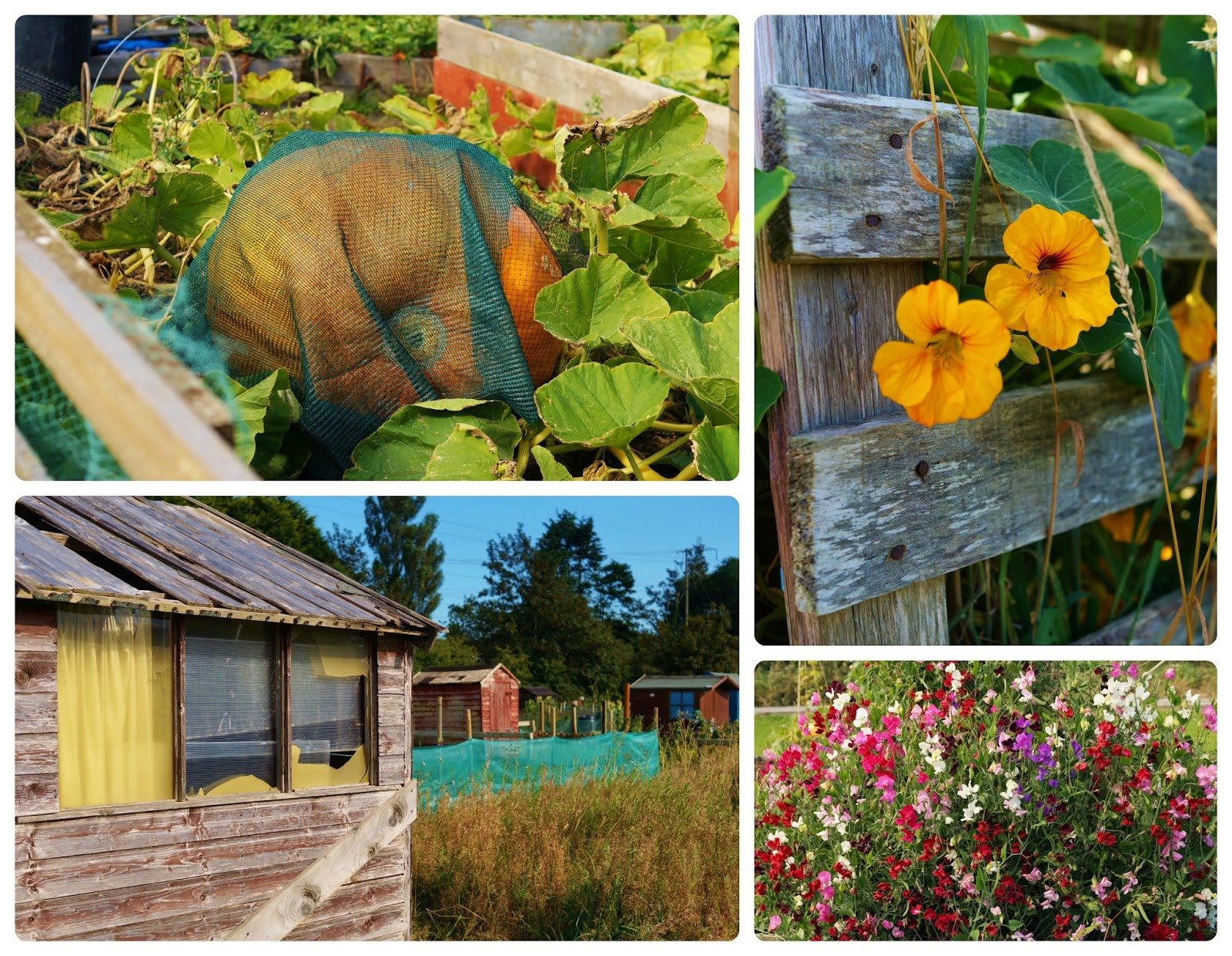 'growourown.blogspot.com' ~ an allotment blog