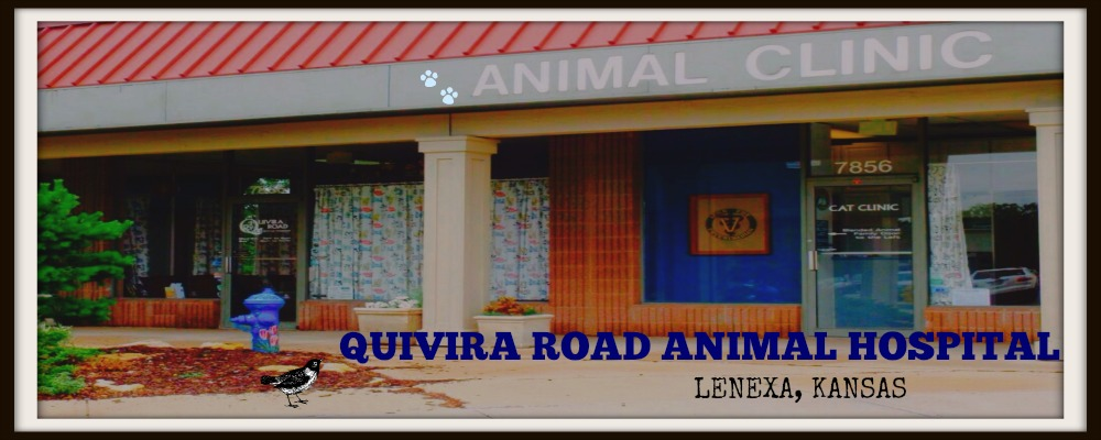 Quivira Road Animal Hospital