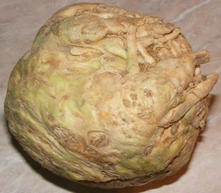 telina radacina, radacina telina, retete cu telina, preparate din telina, legume, legume afrodisiace, telina pentru salate, telina pentru gatit, telina romaneasca, telina de gradina, tratamente cu telina, remedii naturiste cu telina, diete cu telina, cure cu telina, tratament contra impotentei,