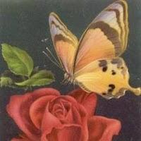 mariposa posada sobre flor