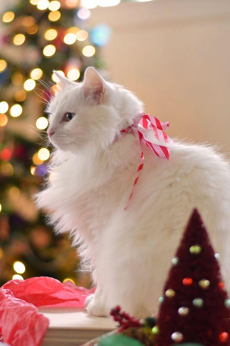 10 Cutest Cat Breeds