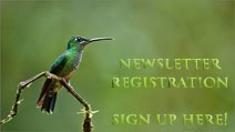 Newsletter Registraion