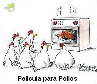 Fotos graciosas de gallinas