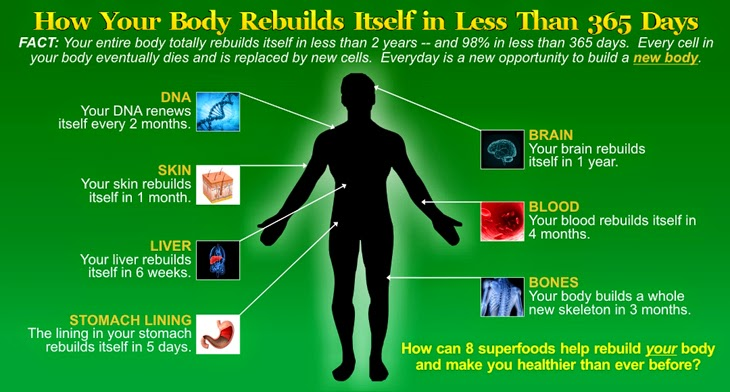 Body 2BRebuilds