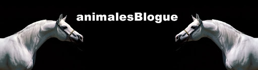 AnimalesBlogue