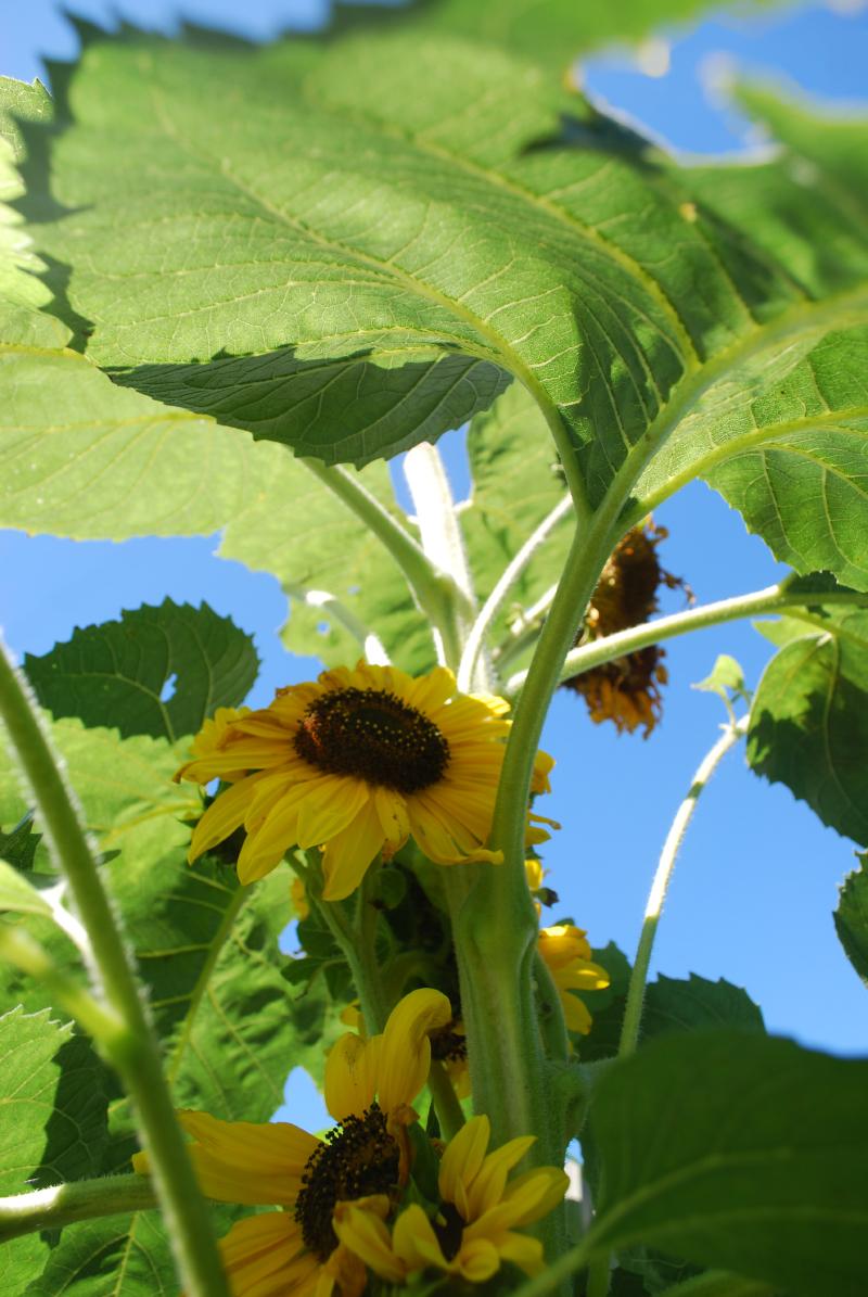 3 jardins au qu bec les succ s et les checs 2011 partie 1 for Autre jardin quebec