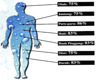Air di dalam tubuh manusia